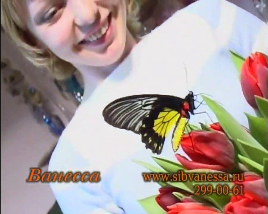 24 сен 2012. Все еще не знаете где купить живую бабочку?. Тогда звоните нам. Покупка, заказ и доставка живых бабочек по украине и др. Страны.