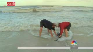 Watch Kerry Sanders Try To Save A Baby Dolphin in Florida