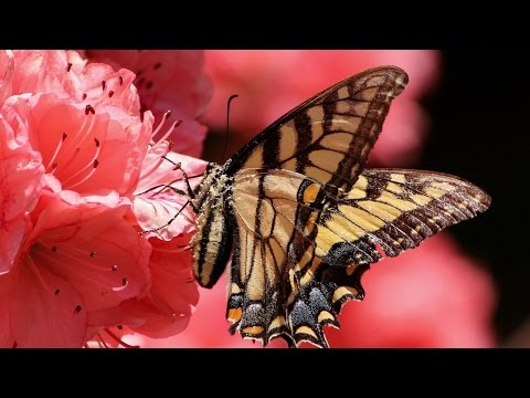 10 Hours Zen Music: Garden of Butterflies, Relaxing, Sleep, Healing and Meditation.