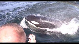 4.23.17 Orca / Killer Whale & Humpback Whales #Monterey #Adventure #Travel