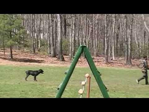 ob3-schutzhund-ipo-canecorso-k9intelligence.com