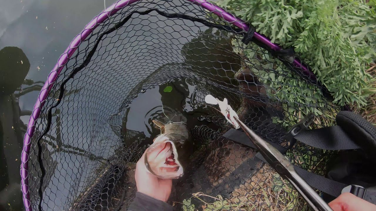 Finding Tons of Tiny Pike while Lure Fishing along a New Stretch of Canal