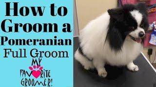 How to Groom a Pomeranian (Domino)