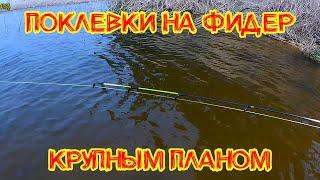 Фидерные поклевки КРУПНЫМ планом Рыбалка весной Рыбалка в мае 2021