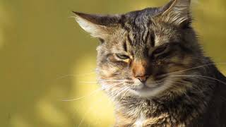beautiful cats || cute cates || lovely cat || smart cats