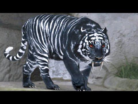 15 Amazing Hybrid Animals That Actually Exist