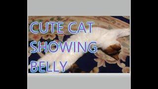 Cute Cat Showing Belly        mrcreativequarter