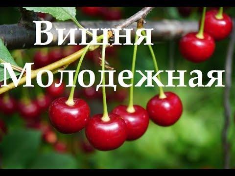 Вопрос: Есть ли такие сорта вишни, которые самоопыляются?