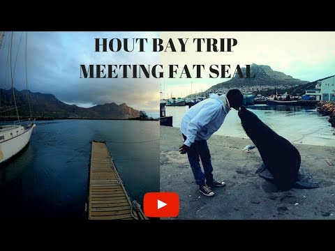 Cape Town - Hout Bay Trip, Meeting fat seal - 4k