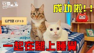 【豆鬥榮EP13】 貓奴最爽成就達成!