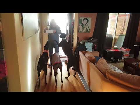 Greyhounds and Owner Reunited.