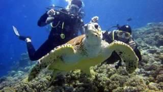 Snorkeling Thumbnail