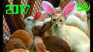 Коты приколы Смотреть Коты смешные Видео приколы с котами Приколы с кошками ТОПовое видео 2017 Коты