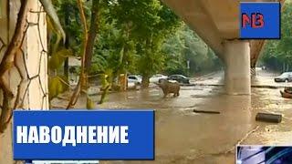 Наводнение в Тбилиси. По улицам бродят дикие животные