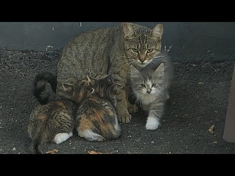 The cat feeds the kittens but they are afraid of me
