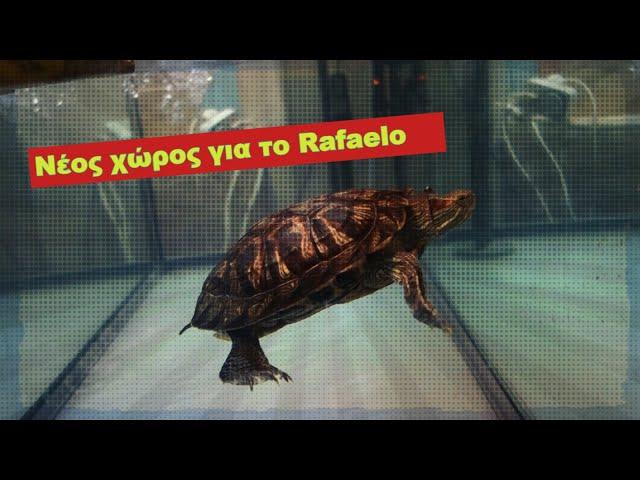Χελώνα νέο ενυδρείο | Feeders Stories ep 45