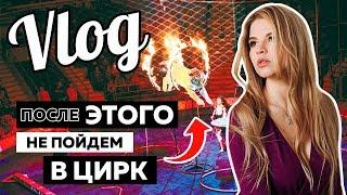 видео Цирк белых зверей в Москве на детский праздник