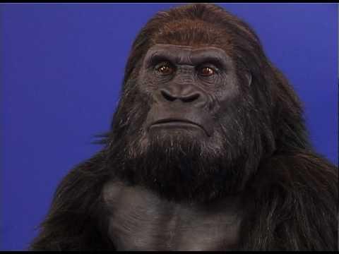 Animatronic Gorilla Costume By Millennium FX & Animatronic Gorilla Costume By Millennium FX - YouTube