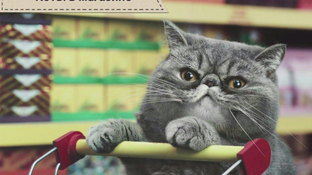 картинки кошки в магазине липецке резон уже