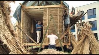 Использование камыша, тростника в качестве биомассы