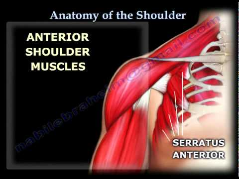 Anatomy of the Shoulder - Everything You Need To Know - Dr. Nabil ...