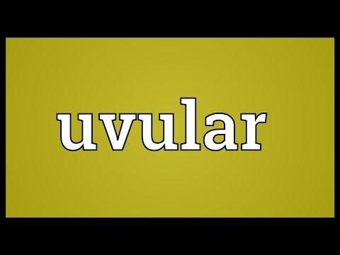 Header of uvular