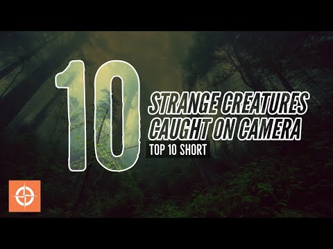 Top 10 Strange Creatures Caught On Camera