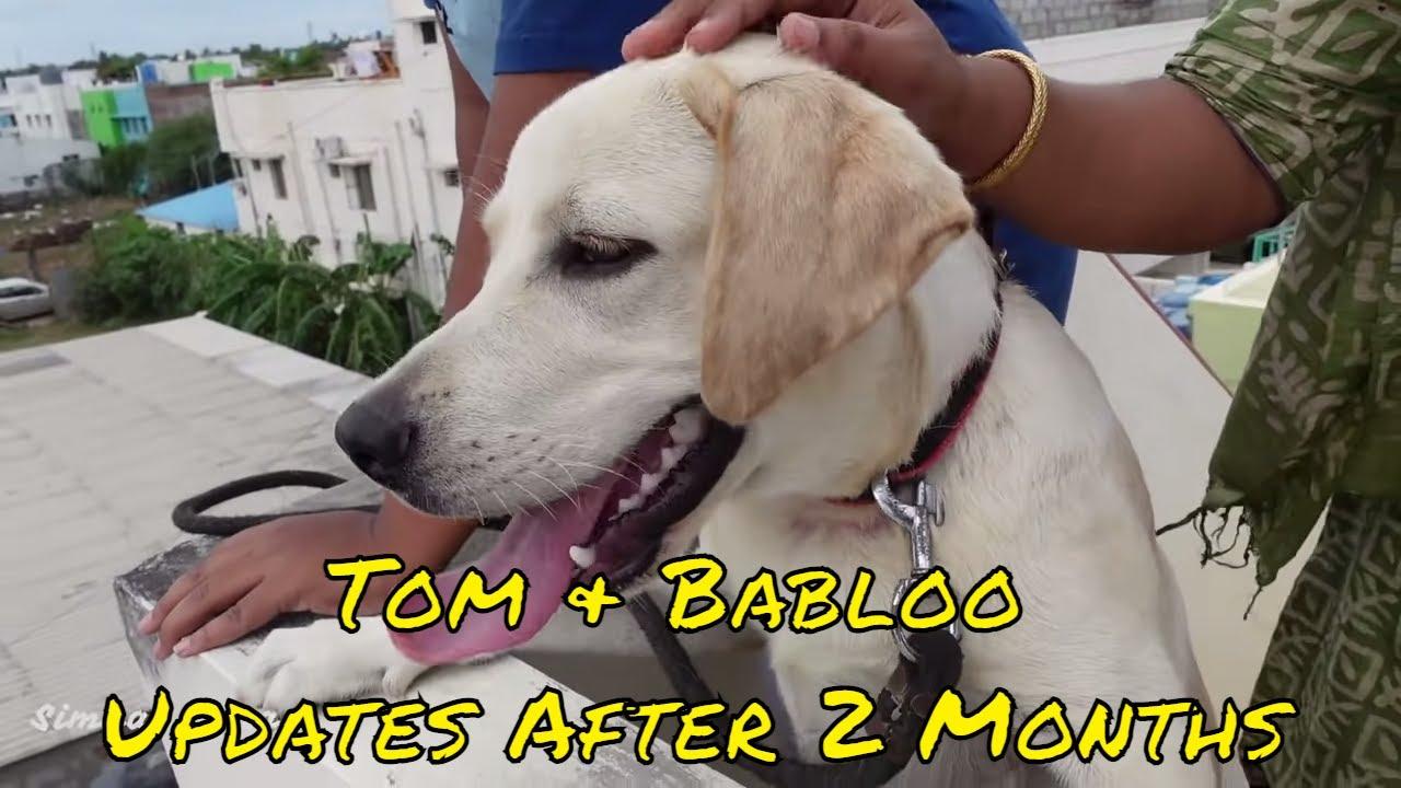 Tom & Babloo Updates After 2 Months | Simbaa Vlogs