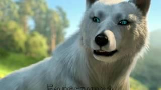 Коты-Воители в облике волков