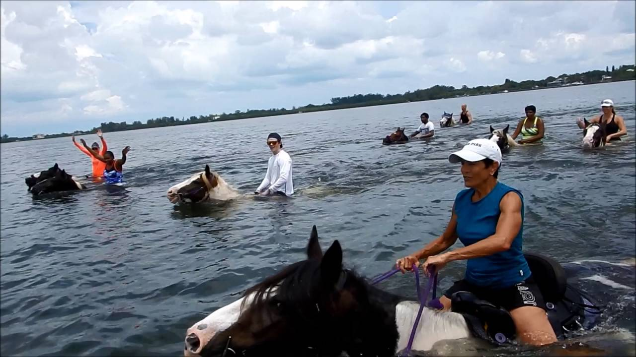 Horseback Riding St Pete Beach Fl