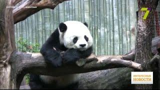 10 животных, чью популяцию восстановили