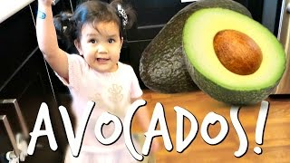 AVOCADOS! - November 21, 2016 -  ItsJudysLife Vlogs