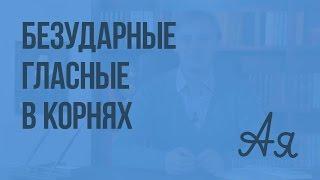 Безударные гласные в корнях слов. Видеоурок по русскому языку 5 класс