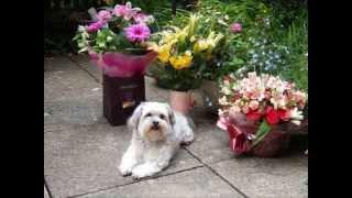 Millie - Canine Epilepsy
