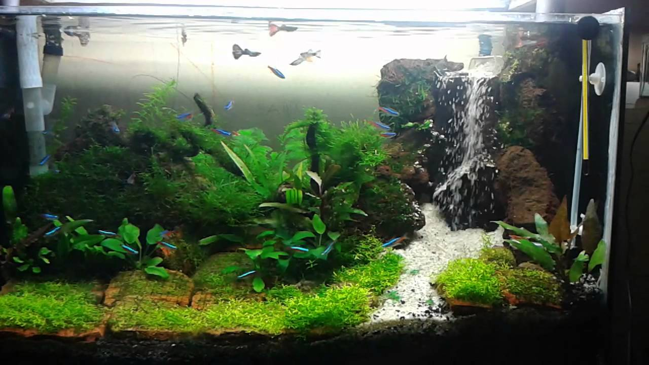Aquascape Waterfallair Terjun YouTube
