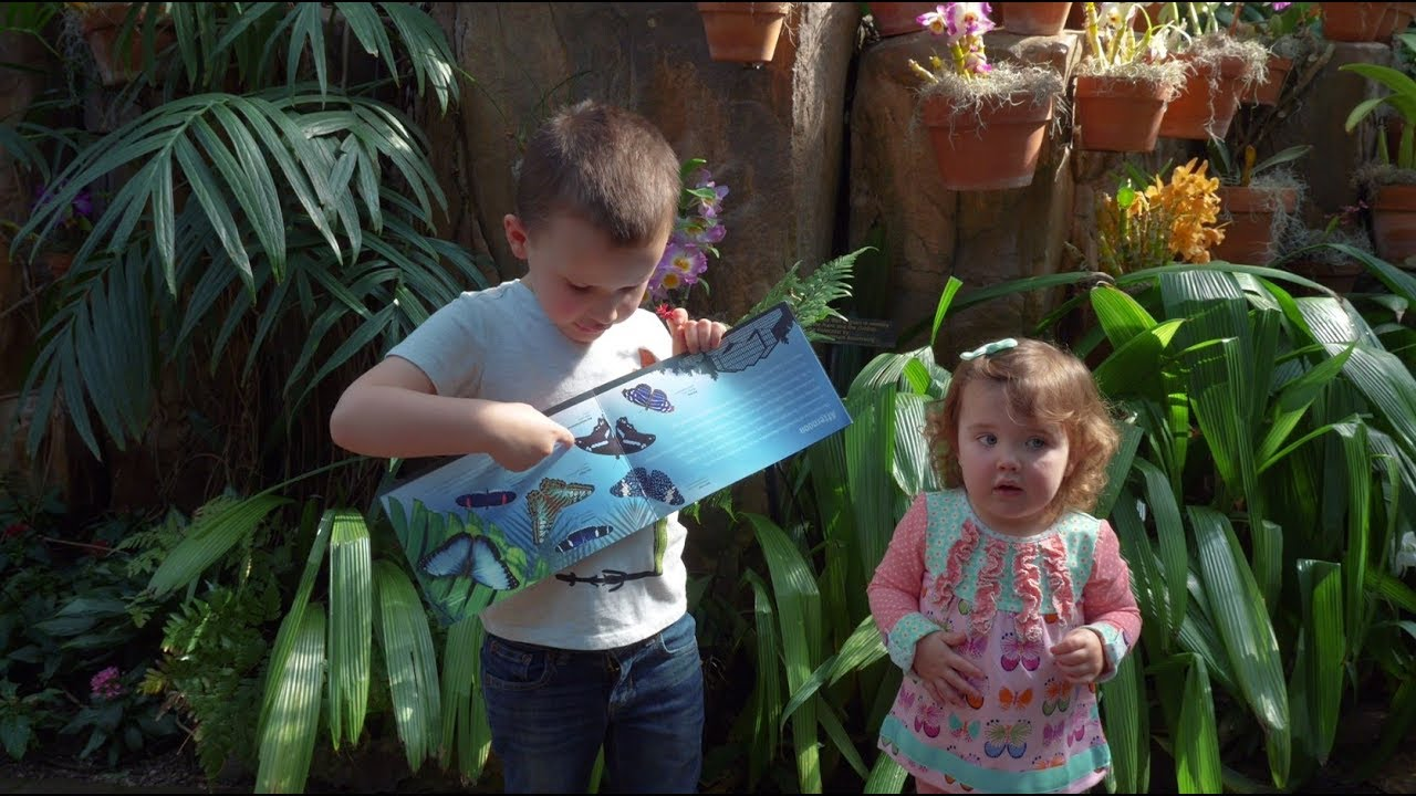 maxresdefault - Butterflies Are Blooming Grand Rapids Frederik Meijer Gardens March 1