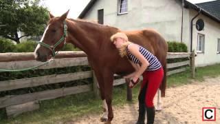 Wszystko o koniach - czyszczenie konia