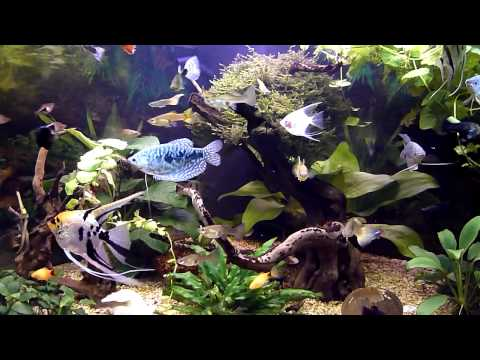 Malawi aquarium trigon 350 doovi for Aquarium 350 litres