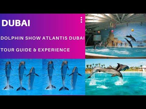 @Dolphin Show with family – Hotel Atlantis the palm Dubai