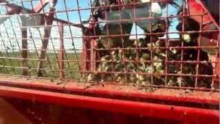 Kombajn do buraków Grimme - Rexor 620 - Agrarada 2