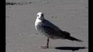 Which Supermarket Do Seagulls Prefer? | Maine | Sea Gull | Scientific Research | Documentary