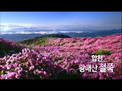 [경남100경] 31경. 합천 황매산 철쭉 (2013.05.29,수)