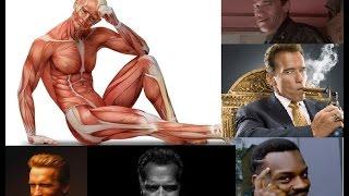 Бодитюнинг. День 12.0. О хитрых способах мышечной системы обмануть нас на тренировке.