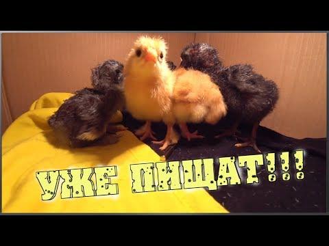 Первая инкубация / Заложили яйца в инкубатор / Инкубатор птичий двор S-64 / Сколько вылупилось?