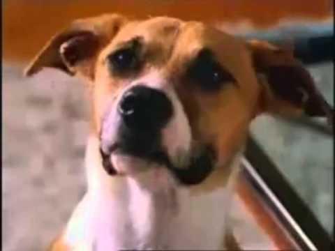 Bud light commercial bad dog youtube bud light commercial bad dog mozeypictures Choice Image