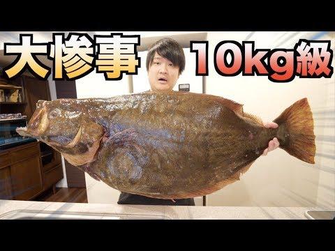 久々に10kgの怪物ヒラメをさばいたら腹から内容物が飛び散ってきた!!