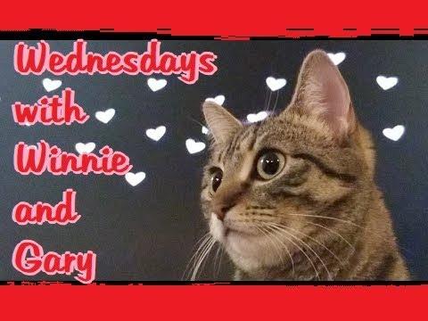 Wednesdays with Winnie & Gary VALENTINE'S EDITION! 2018-02-14
