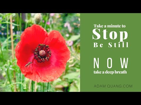 EP7 Bee inside Red Poppy - Forest Ambience for Peaceful Dreams - Relax, Meditation, Sleep, Insomnia