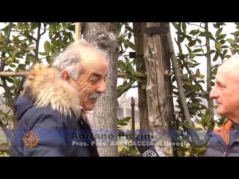ARCICACCIA Intervista al Presidente Provinciale Pizzini