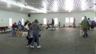 Alden's Kennels Dog Obedience Classes Chicago Il.